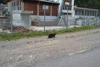 Le castor en quête de nouveaux horizons