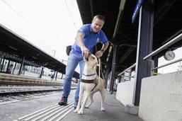 A l'école des chiens guides