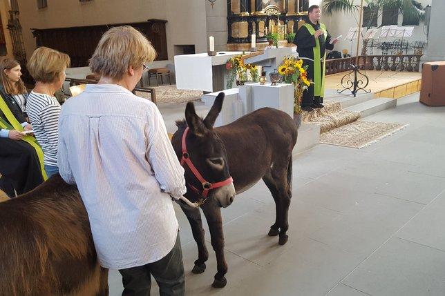 La bénédiction des chiens, des chats et des... ânes!