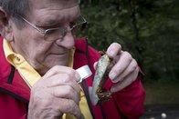Les contrôleurs de champignons traquent les pires espèces