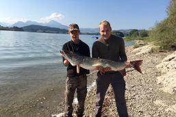 Un brochet de 130cm sorti du lac de la Gruyère