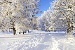 Les somptueuses noces de janvier