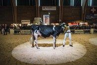 Expo Bulle aura lieu malgré la diarrhée virale bovine