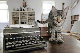 Les chats à six doigts d'Hemingway