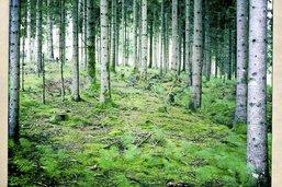 Une gestion des forêts jugée obscure
