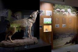 Feu vert pour le déménagement du Musée d'histoire naturelle