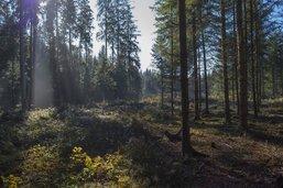 Une gestion forestière jugée obscure
