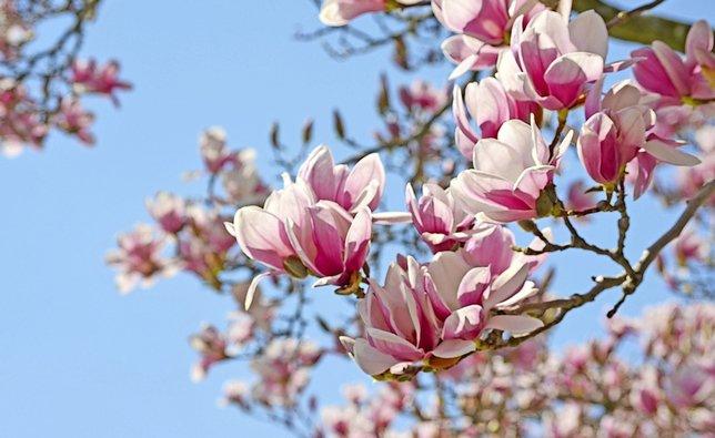 fleur de magnolia. Black Bedroom Furniture Sets. Home Design Ideas