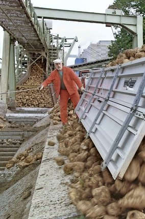 L'industrie sucrière helvétique recense 5000 producteurs de betteraves, auxquels s'ajoutent les250collaborateurs des usines d'Aarberg et de Frauenfeld (photo).  © Keystone