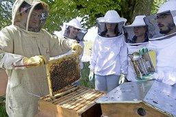Le miel et les abeilles à l'école