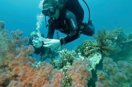Supercostauds, les coraux