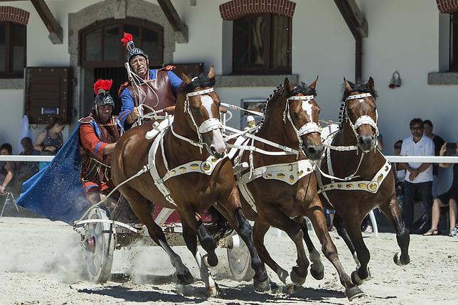 Les poneys seront bien présents à Avenches malgré l'incendie