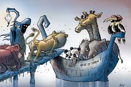 L'extinction des espèces sauvages s'accélère