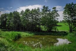 Le marais des Overesses, à Villarepos