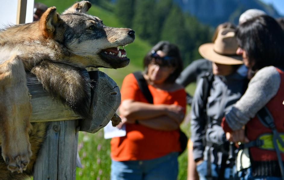 Randonnée thématique sur le loup