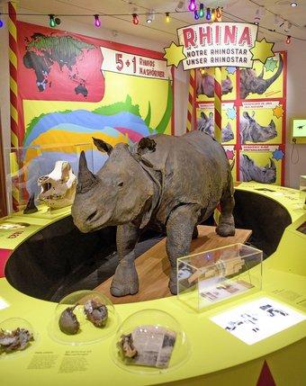 Rhinocéros indien, Rhina trône au cœur d'un décor digne de Bollywood.  © Alain Wicht