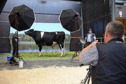 Plus de 200 taureaux attendus à Bulle