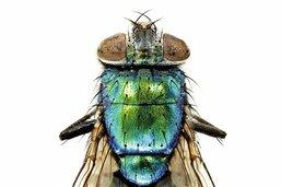 Des insectes comme des joyaux
