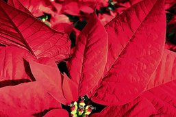 Vous voyez rouge? Cherchez la fleur!