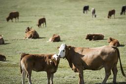 Les sénateurs ne laissent aucune chance à l'initiative des Verts sur une alimentation équitable