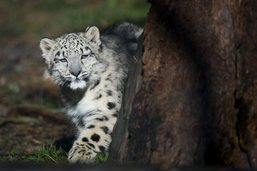 Journée mondiale de la vie sauvage samedi