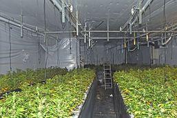 "Installation ""indoor"" de 1500 plants de chanvre à Aadorf/TG"