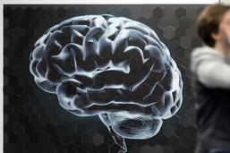 Dès 13 ans, le cerveau cesse de produire les neurones de la mémoire