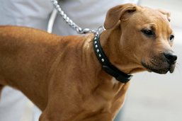 Découverte d'appâts suspects pour chiens à Courtételle (JU)