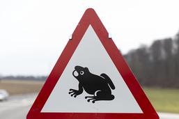 Avec les beaux jours, attention aux amphibiens sur les routes