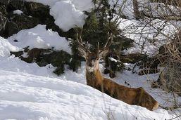 Le canton du Valais appelle à ménager la faune après un hiver rude