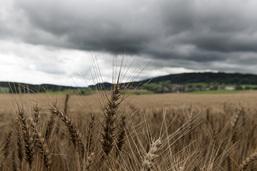 Les Etats rejettent l'initiative sur la souveraineté alimentaire