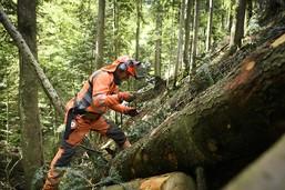 Un bûcheron se tue suite à une chute à Schwarzenburg (BE)