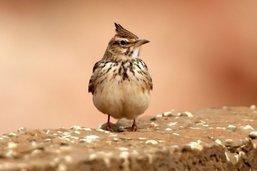 Baisse dramatique des oiseaux dans les campagnes françaises