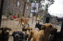 Un trafic de chiens démantelé entre la Slovaquie et la France