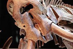 Les mastodontes disparaissent, le climat change