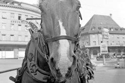 Fribourg, ville à cheval sur la propreté