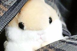 Le hamster accroché à mon sac à dos