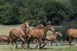 Campagne pour améliorer la détention des chevaux