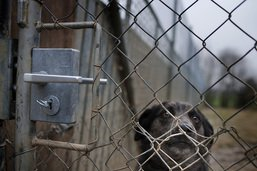 Elevage illégal de chiens découvert au Tessin