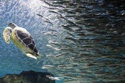 EPFZ: avantage énergétique pour les poissons nageant en bancs
