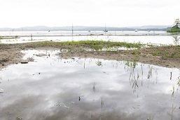 Zone alluviale de onze hectares créée à l'embouchure de la Broye