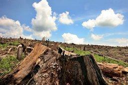 Déforestation en Colombie: l'équivalent du Luxembourg perdu en 2017