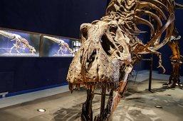 Le T-Rex ne pouvait pas tirer sa langue comme les lézards