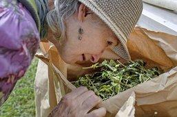 Le succès florissant de l'aromathérapie
