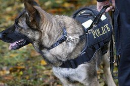 Un voleur arrêté grâce au flair d'un chien policier
