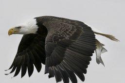 Les espèces en danger aussi menacées par l'administration Trump