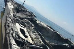 Un bateau en proie aux flammes au large de Rolle: deux blessés