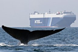 La vie marine sauvage est en train de disparaître (étude)