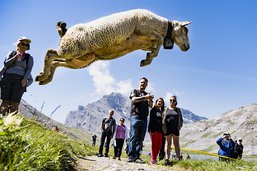 La Gemmi a accueilli dimanche la 61e fête des moutons