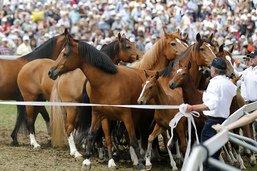 Forte présence fribourgeoise à la fête du cheval à Saignelégier